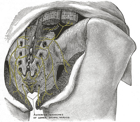 Do Trapped Cluneal Nerves Cause Low Back Pain?